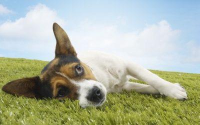 Массаж домашних животных